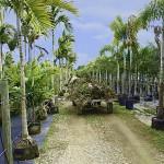 Wie die Palmen in die Badewelt Sinsheim kommen