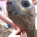 Oma-Opa-Enkel-Tag im Heidelberger Zoo