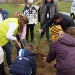 Sinsheimer Schüler pflanzten Bäume mit dem OB