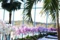 Orchideentausch