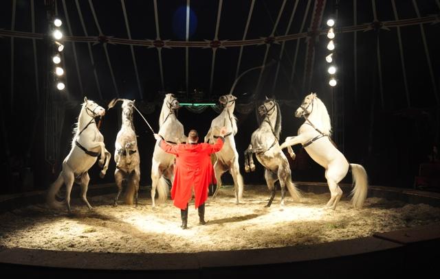 Circus Carelli Kritik