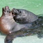 Valentinstag im Zoo Heidelberg für Erwachsene – So lieben die Zootiere