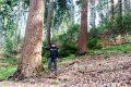 Tag des Waldes am 21. März 2017