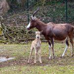 """Jetzt exklusiv für Mamas und Minis: Der """"Mutter-Kind-Tag"""" im Heidelberger Zoo!"""