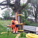 Baumschutz in Eschelbach