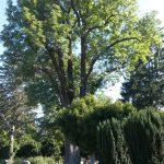 Baumfällung außerhalb der Schutzzeiten