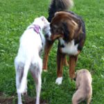 Das Sozialverhalten des Hundes