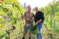Weingut Zipse – Der 17er wird gut