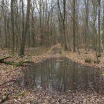 Außergewöhnlich feuchte Witterung erschwert Waldpflege