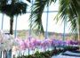 Orchideen für einen guten Zweck!