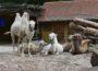 Der Oma-Opa-Enkeltag im Zoo Heidelberg
