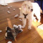 Über die allzu menschlichen Tücken in der Hundeerziehung