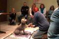 Erste – Hilfe – Kurs am Tier