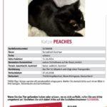 Katzen in Angelbachtal vermisst