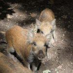 Nachwuchs der Wildtiere braucht Ruhe und Rücksicht
