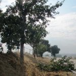 Derzeit erhöhte Gefahr durch Astbruch an Bäumen entlang von Bundes-, Land- und  Kreisstraßen