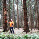 Nadelwälder des Rhein-Neckar-Kreises leiden unter der Borkenkäfer-Plage