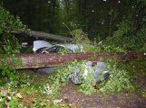 Autos von Bäumen getroffen – Mehrere Schwerverletzte