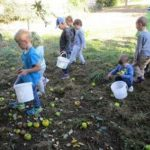 Apfelernte bei Familie Bürklin in Helmhof