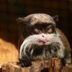 So ein Affentheater in der Zooschule Heidelberg