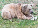 Von clever bis gefährlich – Zooschule bringt Abwechslung in die Winterferien