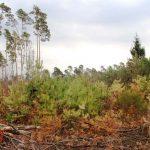 Auswirkungen des Klimawandels werden im Wald bereits deutlich sichtbar