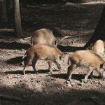 Die Brut- und Setzzeit der Wildtiere hat begonnen