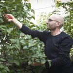 Rosenschere und Co.: Experte klärt auf