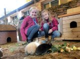 Haustier-Workshop am Ende der Sommerferien