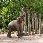 Keine Langeweile: Wie beschäftigt man Zootiere?