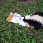 Vorlesetag im Heidelberger Zoo