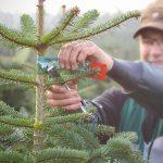 Weihnachtsbäume aus verantwortungsvollem Anbau