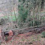 """Nachwirkungen von """"Sabine"""": Sturmholz in den Wäldern des Rhein-Neckar-Kreises wird beseitigt"""
