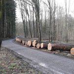 Kreisforstamt beteiligt sich an Bruchsaler Laubwertholz-Submission