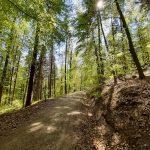 Der Waldbesuch in Zeiten der Corona-Krise