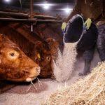 Beschäftigte in der Landwirtschaft müssen um Zusatzrente bangen
