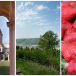 Kultur, Natur und Kulinarik – Den Rhein-Neckar-Kreis neu entdecken