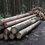"""Neue Verwaltungsvorschrift """"Nachhaltige Waldwirtschaft"""""""