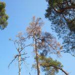 Bäume reagieren auf Sommerhitze und Trockenheit