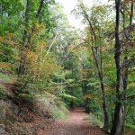Wald bietet vielfältige Möglichkeiten zum Erholen