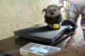 Zoo-Team freut sich über mobile Waage, GPS-Sender & Wildkameras