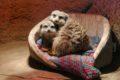 Den Zoo-Tieren zum Weihnachtsfest eine Freude machen