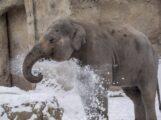 Schnee und Eis im Zoo Heidelberg