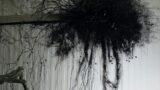 """Radiale – Kunst im Kreis"" mit virtueller Doppel-Vernissage eröffnet"