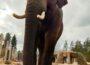 Elefanten-WG im Zoo Heidelberg vergrößert sich