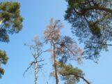 """""""Ein kranker Wald erhöht die Unfallgefahr – gerade auch für Waldbesucher"""""""