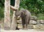 Der Neue im Zoo Heidelberg: Namsai