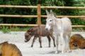 Fertiggestellt und eröffnet: Bauernhof im Zoo