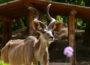 Zoo Heidelberg: Mit der 3G-Regel den Zoo besuchen
