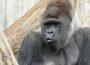 Gemeinsam für die Heidelberger Gorillas